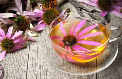 Is Echinacea Good for Colds?