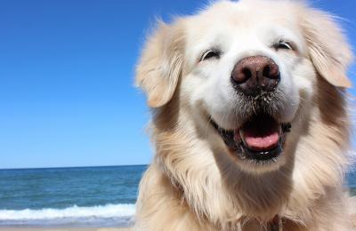 Why Holistic Health is Important for Your Dog