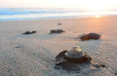 6 Simple Ways to Help Save Our Oceans